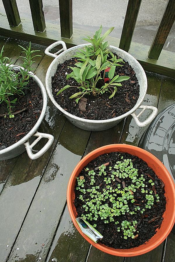 Herbs_9may2012
