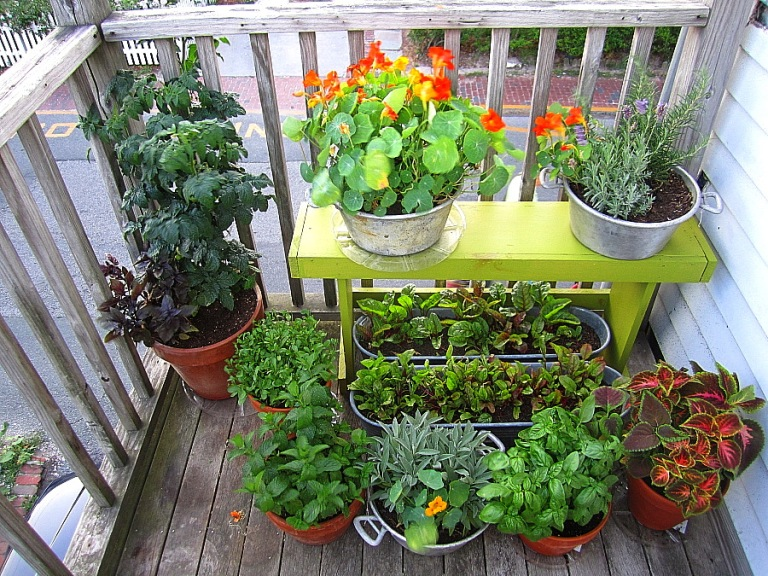 Porch_garden_12july2012