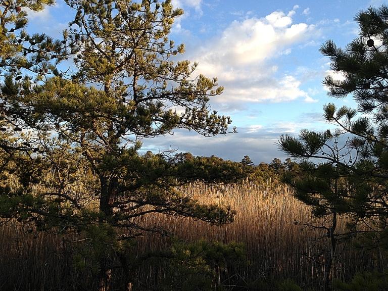 pines_27mar2013